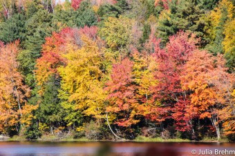 fall_foliage_20-1-von-1