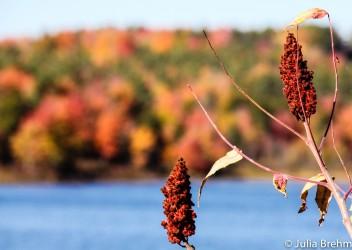 fall_foliage_21-1-von-1