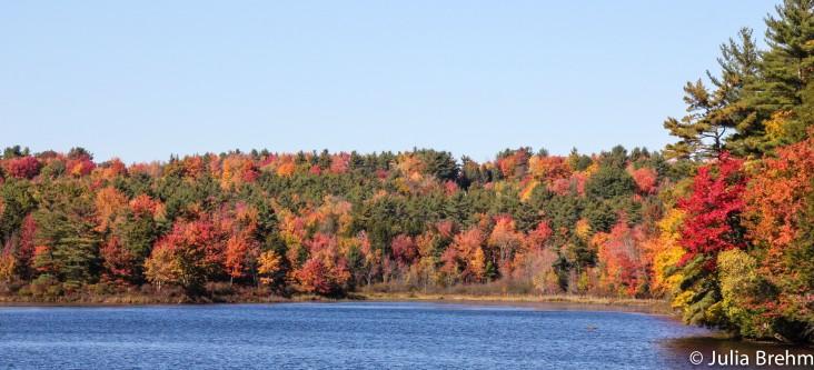 fall_foliage_22-1-von-1