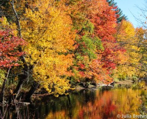 fall_foliage_28-1-von-1