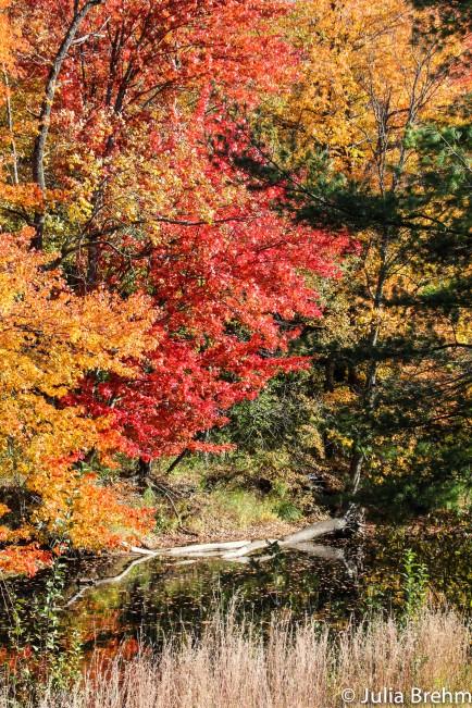 fall_foliage_29-1-von-1