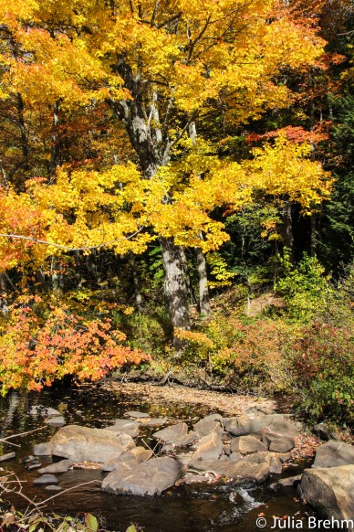 fall_foliage_30-1-von-1