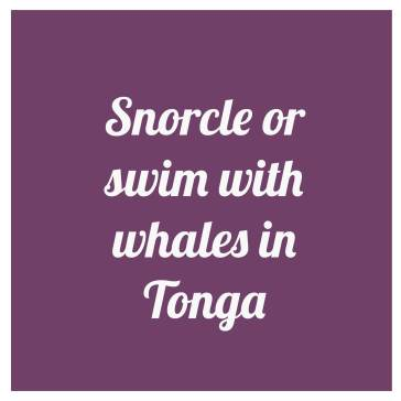 snorcle-with-whales