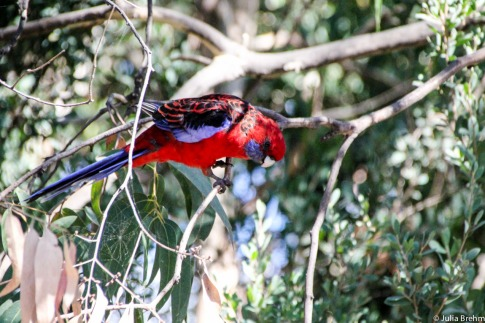 Colourful birds - don't ask me what they are called.