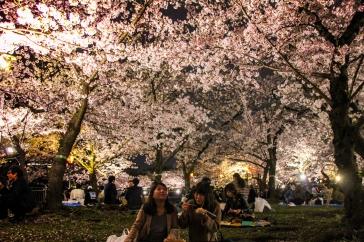 Kirschblütenpracht Park & Burg Osaka
