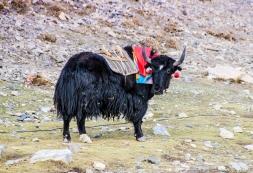 Himalaja_Region_12 (1 von 1)