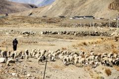 Himalaja_Region_22 (1 von 1)